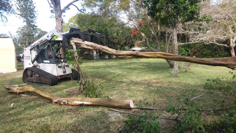 Port Charlotte Tree Service Annual Tree Cleanup tree services